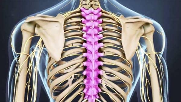 anatomie du dos espace francilien du rachis clinique du rachis versailles paris 2