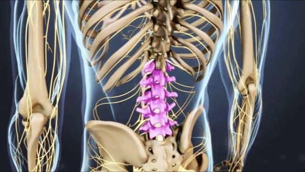 anatomie du dos espace francilien du rachis clinique du rachis versailles paris 3