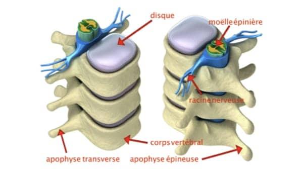 anatomie du dos espace francilien du rachis clinique du rachis versailles paris 9