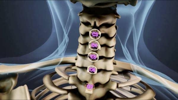 rachis cervical anatomie du dos espace francilien du rachis clinique du rachis versailles paris 1